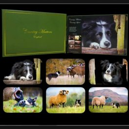 COLLIE PLACEMATS