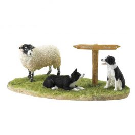 Ewe Take the Left (Swaledale)